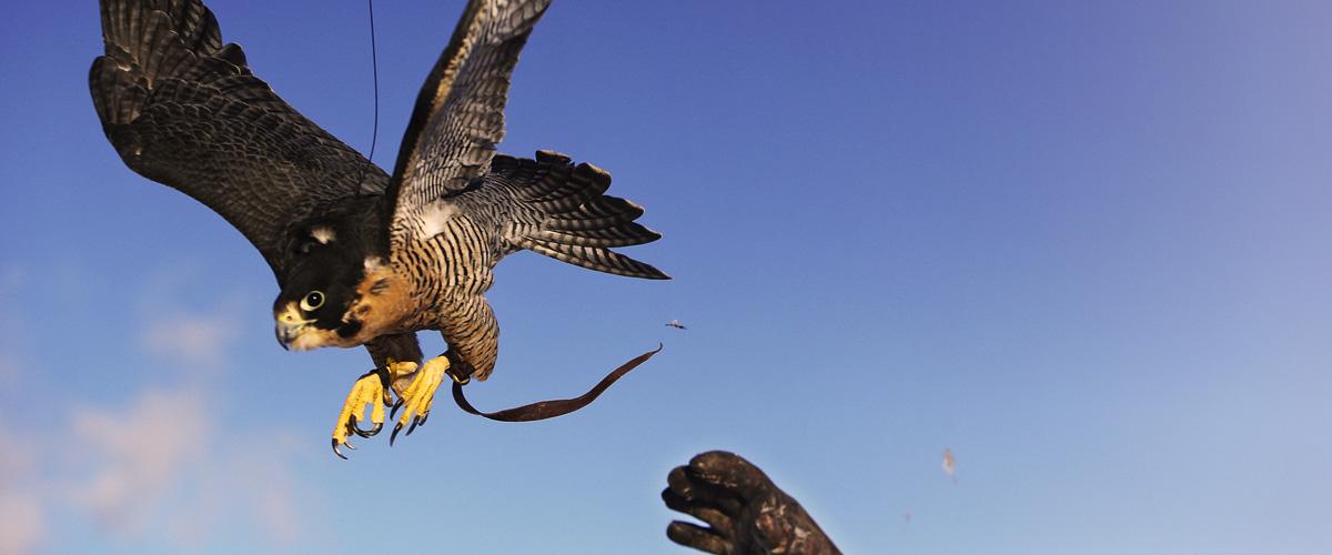 img-pm-falconry-slider